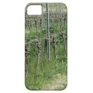 Bare vineyard field in winter . Tuscany, Italy iPhone 5 Cover
