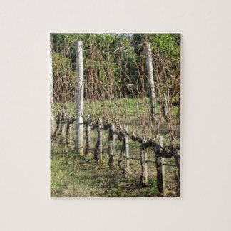 Bare vineyard field in winter . Tuscany, Italy Jigsaw Puzzle