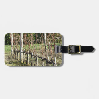 Bare vineyard field in winter . Tuscany, Italy Luggage Tag