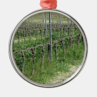 Bare vineyard field in winter . Tuscany, Italy Metal Ornament
