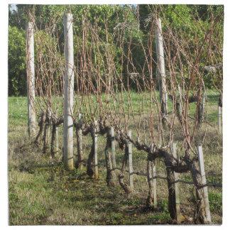 Bare vineyard field in winter . Tuscany, Italy Napkin