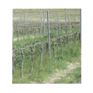Bare vineyard field in winter . Tuscany, Italy Notepad