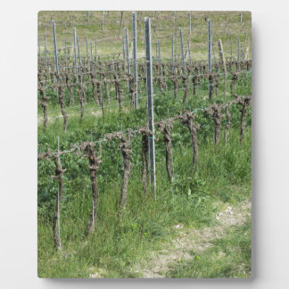 Bare vineyard field in winter . Tuscany, Italy Plaque
