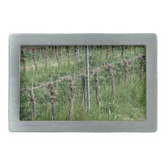 Bare vineyard field in winter . Tuscany, Italy Rectangular Belt Buckle