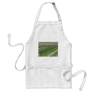Bare vineyard field in winter . Tuscany, Italy Standard Apron