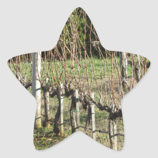 Bare vineyard field in winter . Tuscany, Italy Star Sticker