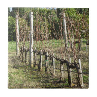 Bare vineyard field in winter . Tuscany, Italy Tile