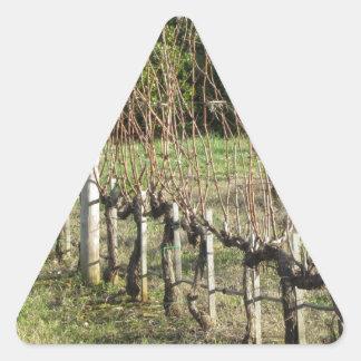 Bare vineyard field in winter . Tuscany, Italy Triangle Sticker
