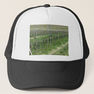 Bare vineyard field in winter . Tuscany, Italy Trucker Hat