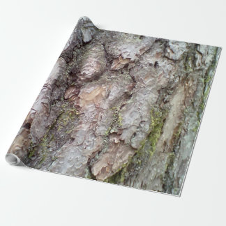 bark of Scots pine