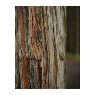 Bark on Wood Wood Wall Decor