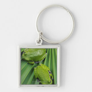 Barking Tree Frog (hyla gratiosa) Silver-Colored Square Keychain