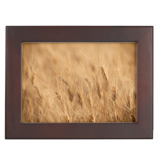 Barley field memory box