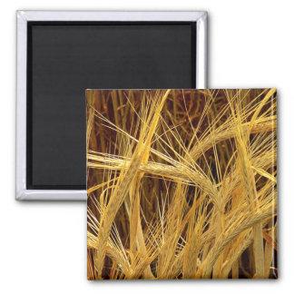 Barley Photograph Square Magnet