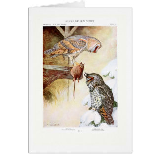 Barn and Long-eared Owls Greeting Cards