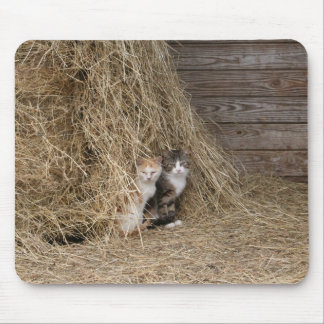 Barn Cats Mouse Pad