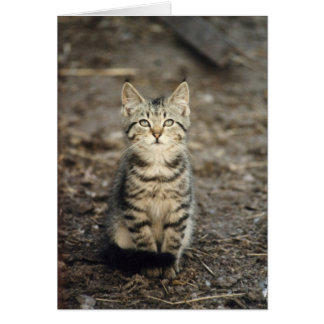 """Barn Kitten"" Animal Photo Greeting Card"