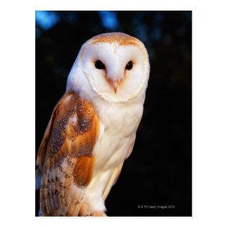 Barn Owl 2 Postcard