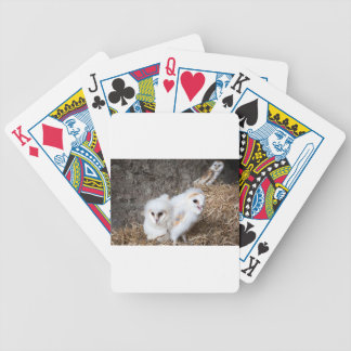 Barn Owl Chicks In A Nest Bicycle Playing Cards