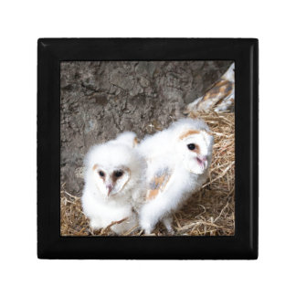 Barn Owl Chicks In A Nest Gift Box