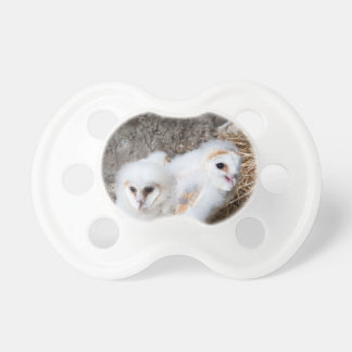 Barn Owl Chicks In A Nest Pacifier