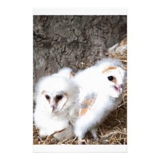 Barn Owl Chicks In A Nest Stationery