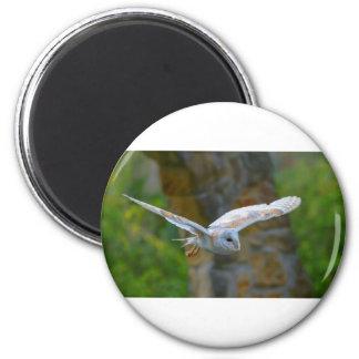 Barn Owl Flying Magnet