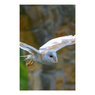 Barn Owl Flying Stationery