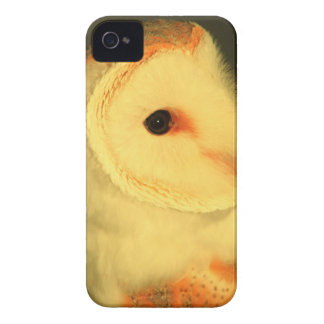 Barn owl iPhone 4 Case-Mate case