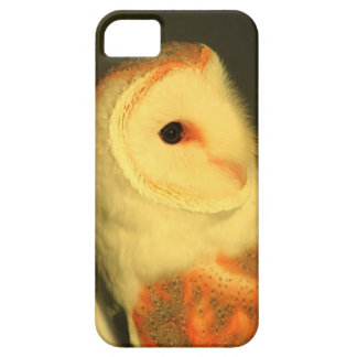 Barn owl iPhone 5 cover