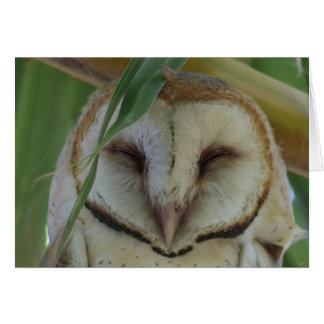 Barn Owl – Joe Sweeney – card