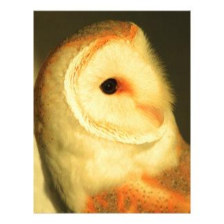 Barn owl letterhead