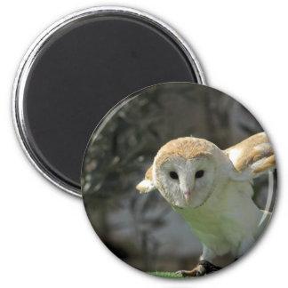 Barn Owl Magnet Magnets