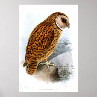 Barn Owl Matte Poster
