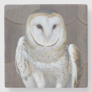 Barn Owl Photo Stone Beverage Coaster