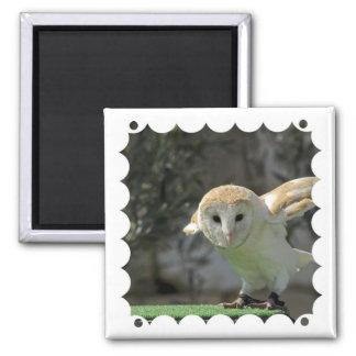 Barn Owl Square Magnet  Magnet
