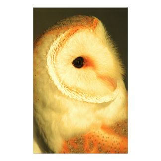 Barn owl stationery
