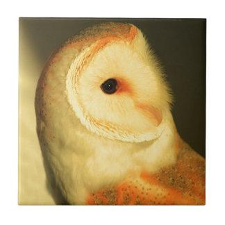 Barn owl tiles