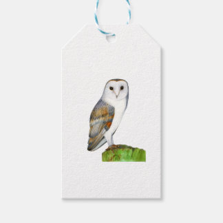 Barn Owl Tyto Alba Watercolor Artwork Print Gift Tags