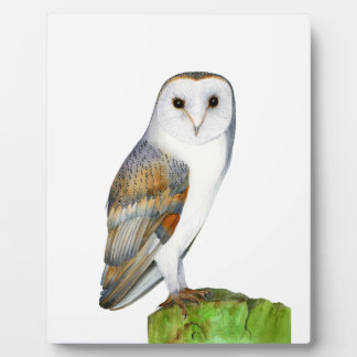 Barn Owl Tyto Alba Watercolor Artwork Print Plaque