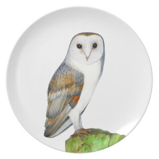 Barn Owl Tyto Alba Watercolor Artwork Print Plate