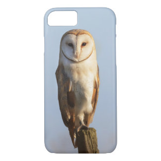 Barn owl with a blue sky background iPhone 8/7 case