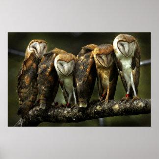 Barn Owls print