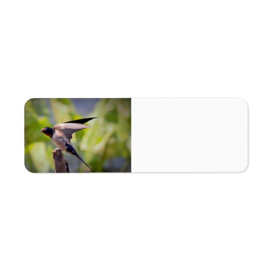 Barn Swallow Address Labels
