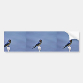 Barn swallow bumper sticker