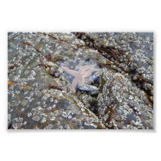 Barnacles and a Starfish Photograph