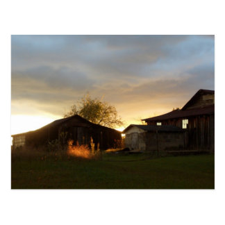 Barns in the Afternoon Sunlight Postcard