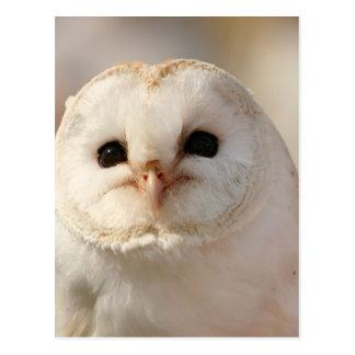 Barny the Barn Owl Postcard