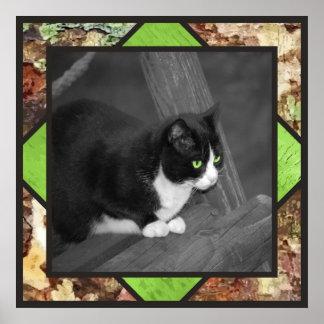 Barnyard Cat Poster