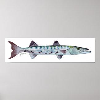 Barracuda fish poster